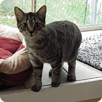 Adopt A Pet :: Cher - kitten - Rootstown, OH