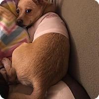Adopt A Pet :: Willow - Pataskala, OH