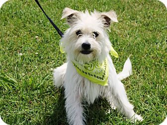 Terrier (Unknown Type, Small) Mix Dog for adoption in Princeton, Kentucky - Baxter