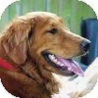 Adopt A Pet :: Lucy - Yorktown, VA