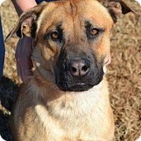 Adopt A Pet :: Bianca(CL) - Greensboro, NC