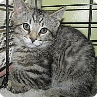 Adopt A Pet :: Hawk - Acme, PA