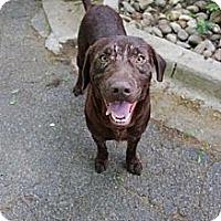 Adopt A Pet :: Gibson - Cumming, GA