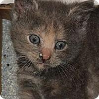 Adopt A Pet :: Sweet - Island Park, NY