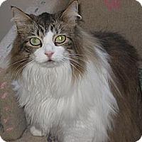 Adopt A Pet :: Sam - Huffman, TX