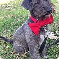 Adopt A Pet :: Fudge - Long Beach, CA