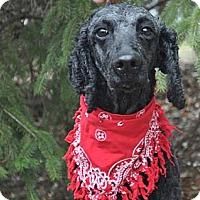 Adopt A Pet :: ROSA - Elk River, MN