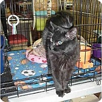 Adopt A Pet :: Ramsey - Chesapeake, VA
