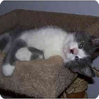 Adopt A Pet :: Evan - Montgomery, IL