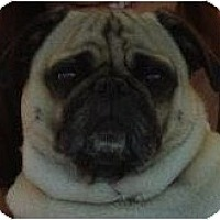 Adopt A Pet :: Louis-NJ - Mays Landing, NJ