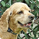 Adopt A Pet :: Scooby Doo