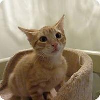 Adopt A Pet :: Leo - Colmar, PA