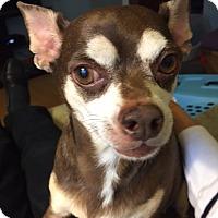 Adopt A Pet :: Tango - O'Fallon, MO