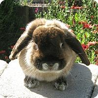 Adopt A Pet :: Hershel - Bonita, CA