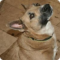 Adopt A Pet :: Moe - Tempe, AZ