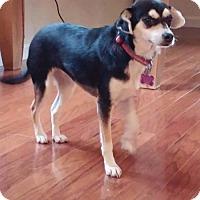 Adopt A Pet :: Jessie - Arlington, WA