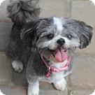 Adopt A Pet :: Camille