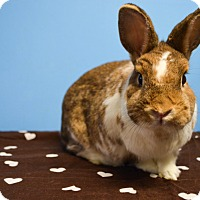 Adopt A Pet :: Butterscotch - Fountain Valley, CA
