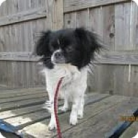 Adopt A Pet :: Jasmine (Jazzy) - Shawnee Mission, KS