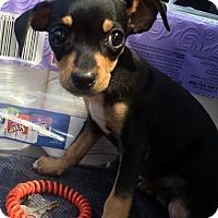 Adopt A Pet :: Fiona - Smyrna, GA