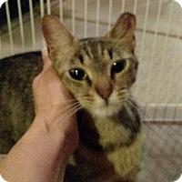 Adopt A Pet :: Juliet - Wakinsville, GA