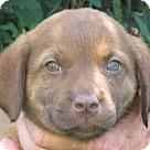 Adopt A Pet :: Nelson