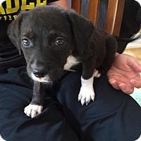 Adopt A Pet :: Gigi - Genoa City, WI