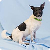 Adopt A Pet :: Sargeant - Atlanta, GA