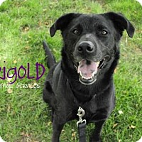 Adopt A Pet :: Marigold - Hamilton, ON