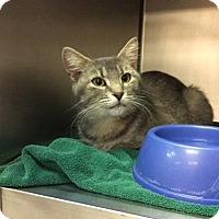 Adopt A Pet :: Moon - Janesville, WI