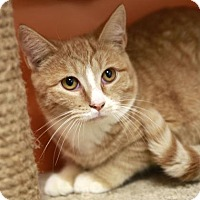 Adopt A Pet :: Hudson - Kettering, OH