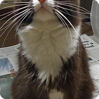 Adopt A Pet :: Diamond - Riverside, RI