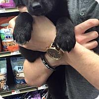 Adopt A Pet :: Miles - Mesquite, TX