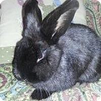 Adopt A Pet :: Becky - Woburn, MA