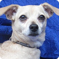 Adopt A Pet :: Ginger Chia - Cuba, NY