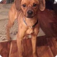 Adopt A Pet :: Precious - West Allis, WI