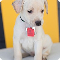 Adopt A Pet :: Rockwood - Broomfield, CO