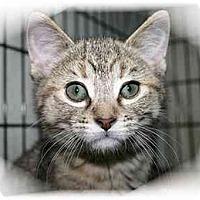Adopt A Pet :: Talia - Montgomery, IL