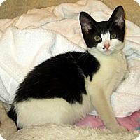 Adopt A Pet :: Cindy - Lafayette, CA