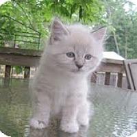 Adopt A Pet :: Kashmire & Keisha - Arlington, VA