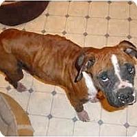 Adopt A Pet :: Pretzel - Thomasville, GA