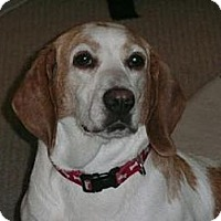 Adopt A Pet :: Tillie - Phoenix, AZ