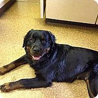 Adopt A Pet :: Maggie - Frederick, PA