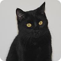 Adopt A Pet :: Bell - Torrance, CA