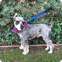 Adopt A Pet :: MAX - Irvine, CA