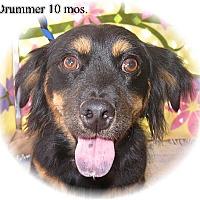 Adopt A Pet :: Drummer - Tucson, AZ