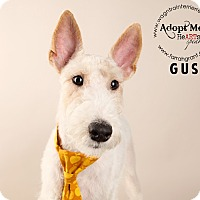 Adopt A Pet :: Gus-Pending Adoption - Omaha, NE