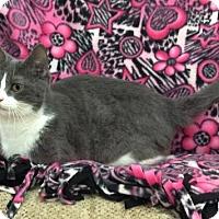 Adopt A Pet :: Elsa - ADOPTED - Livonia, MI