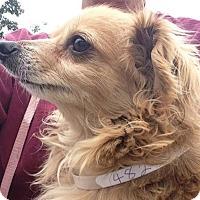 Adopt A Pet :: Dudley - Gilbert, AZ