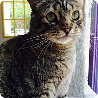 Adopt A Pet :: Kiera Knightly - Richboro, PA